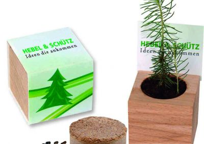 Eglute auginimui iš sėklų mediniame stovelyje