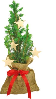 Gyva Kalėdinė eglutė dekoruota, džiuto maišelyje